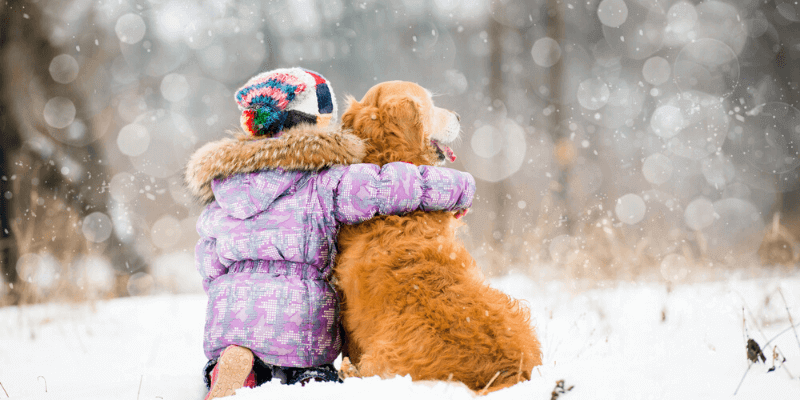 dog caring tips during skiing